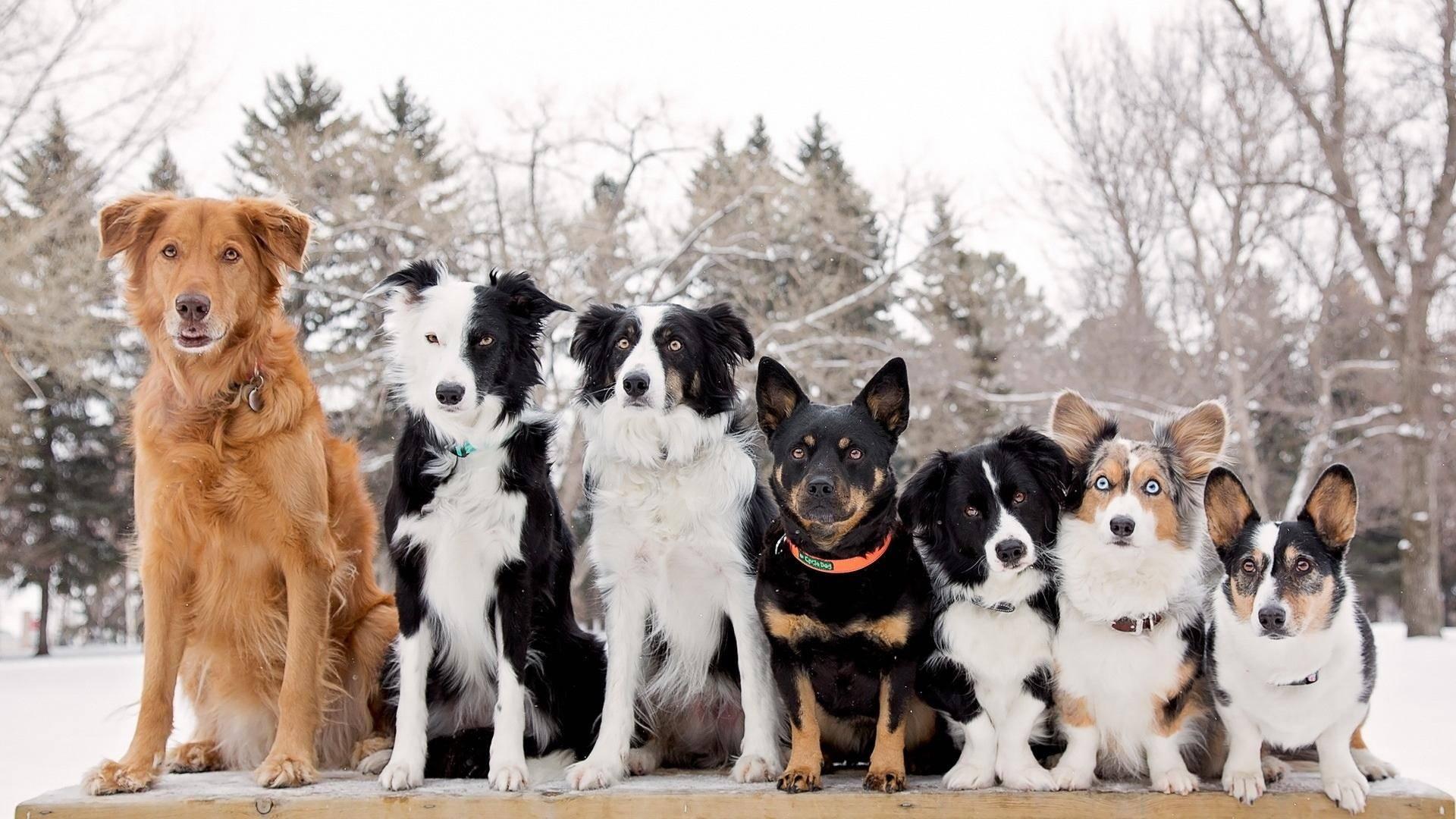 соломинка фото собак разных пород щенки здесь располагаются почки