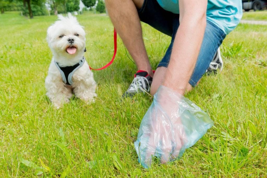 Штраф за собаку без привязи
