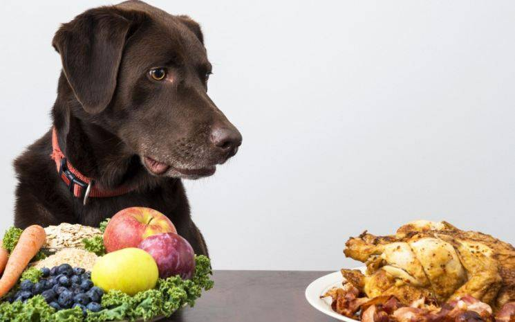 Куриные лапы польза и вред для собак. Можно ли кормить собаку куриными головами, лапами и шеями? Субпродукты в рационе собак
