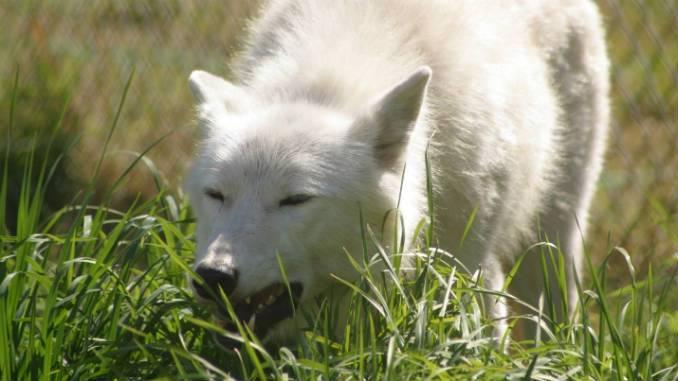 Собаку рвет желчью: причины, симптомы, лечение 2