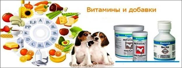Корм для собак рыбий жир