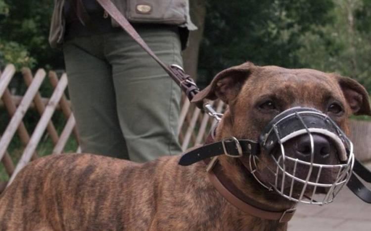 Почему собака может рычать на хозяина и кусать его: что можно сделать