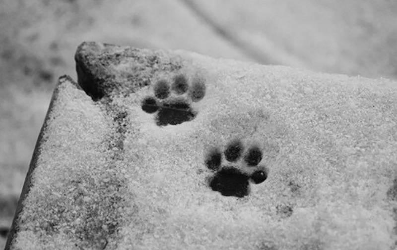 Следы животных и птиц на снегу – схемы с названиями