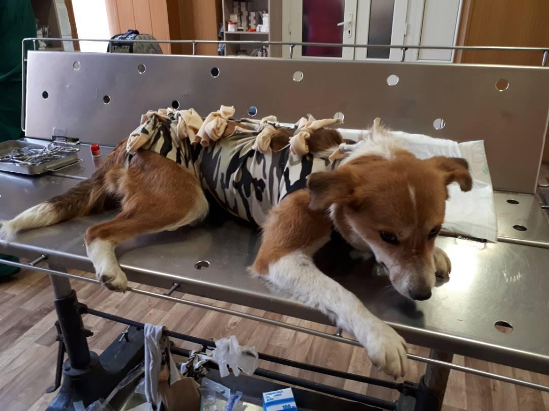 Собака Похудела После Стерилизации. Новое в блогах