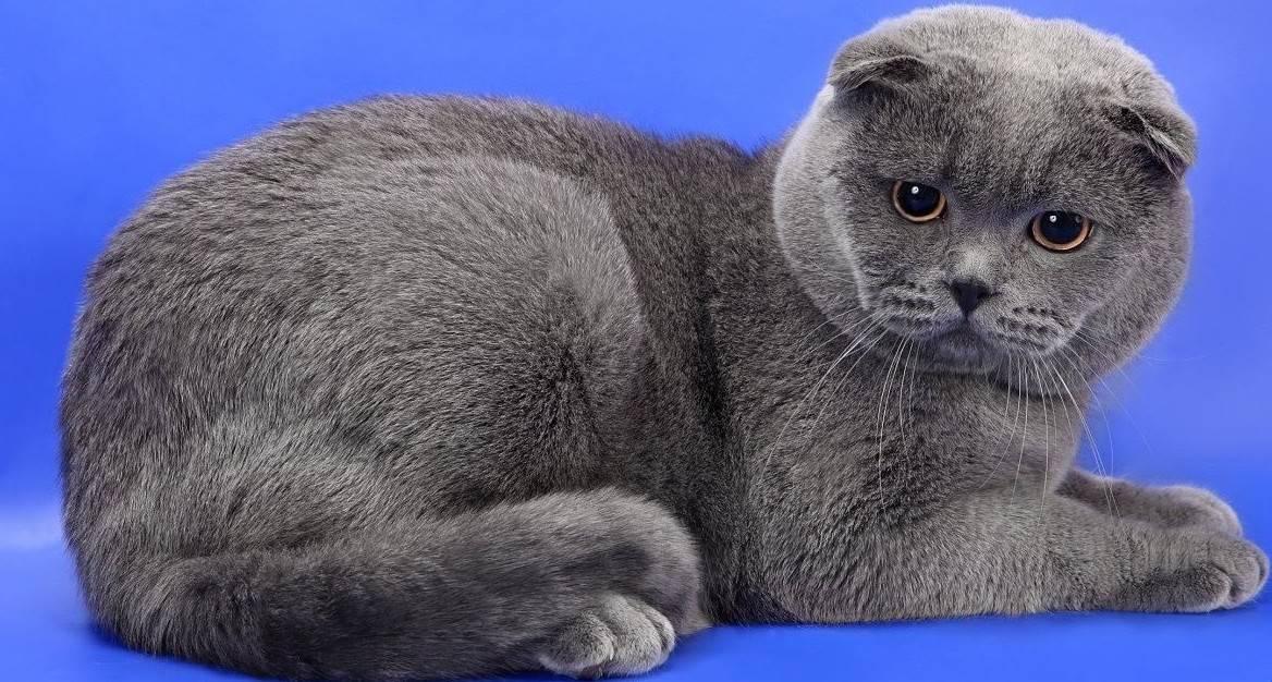 Кого лучше выбрать для квартиры — кота или кошку: особенности выбора пола