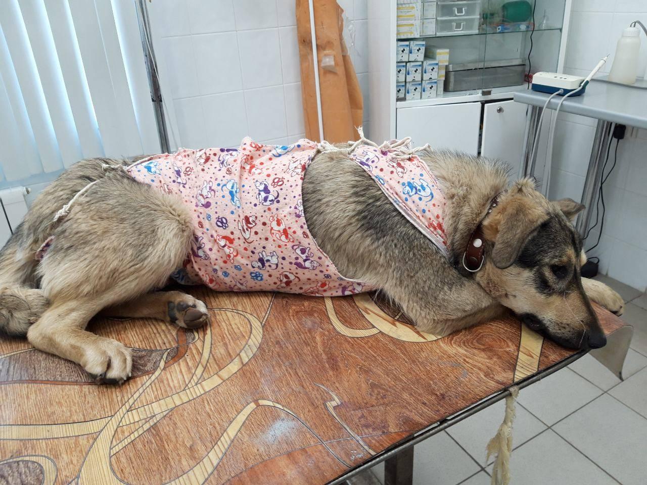 Собака Похудела После Стерилизации.