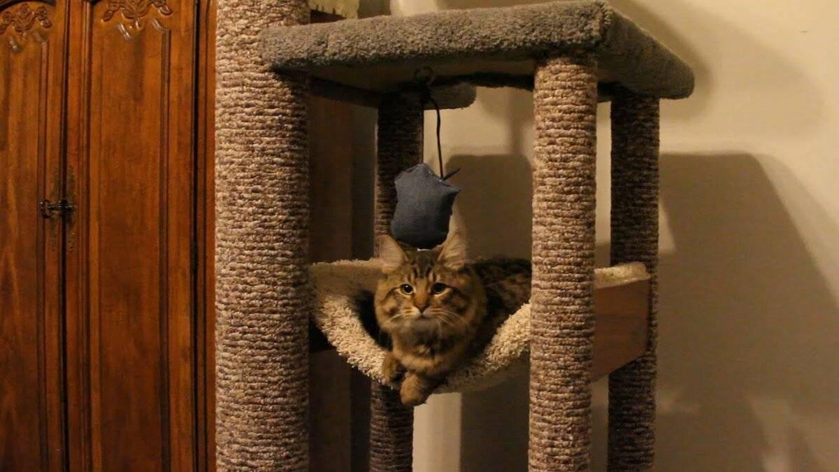Место для кота в доме