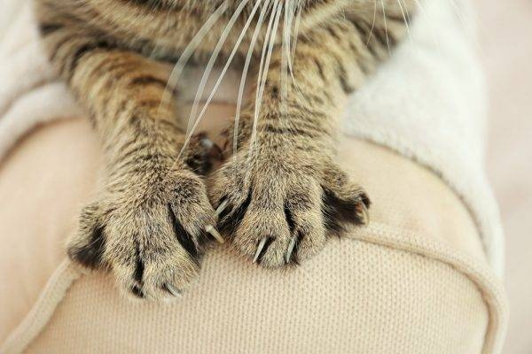 Сколько лап у двух кошек