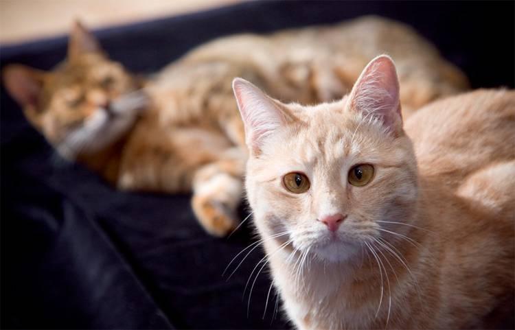 Кошки с раскосыми глазами фото
