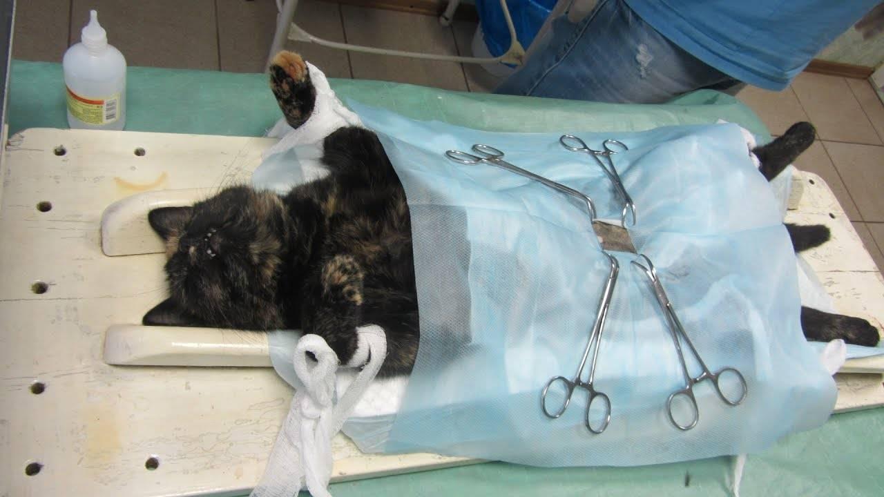 Собака похудела после стерилизации