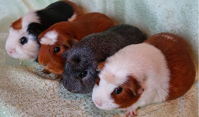 разные домашние животные фото и названия